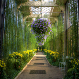 by Jerry Keefer - Nature Up Close Other plants ( longwood gardens, path, nature, landscape )