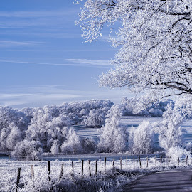 Morning frozen by Stankowski Daniel - Landscapes Prairies, Meadows & Fields ( winter, beautiful, white, frost, trees, morning, frozen )
