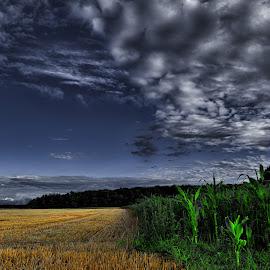 Corn field by Manuela Dedić - Landscapes Prairies, Meadows & Fields