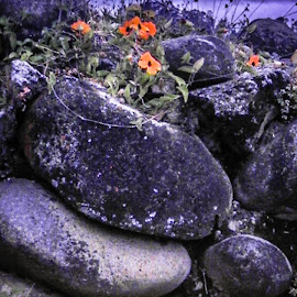 by Lisa Frisby - Novices Only Objects & Still Life ( quito ecuador, ecuador, still life, quito graden, rock, rock garden, rock gardens, garden flowers, gardening, flowers, objects, rocks, garden, floral, flower )
