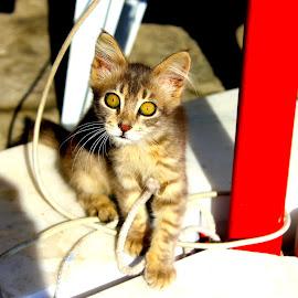 What????? by Meli Cro - Animals - Cats Kittens ( look, kitten, cat, city scene, playful, grey, portrait )