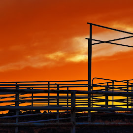 Cattle Pens 1 by Cheryl Petretti - Novices Only Landscapes ( mariposa, sunset, cattle pens, fire in the sky,  )