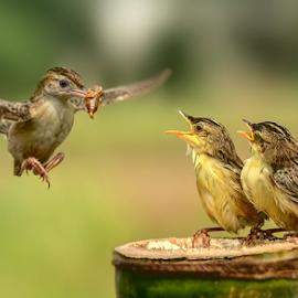 Catch on by MazLoy Husada - Animals Birds