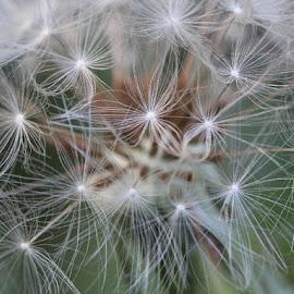 by РАЙНА СИНДЖИРЛИЕВА - Nature Up Close Leaves & Grasses