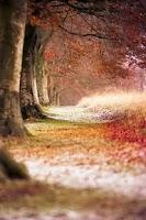 Screenshot of Wallpaper Nature Free HD