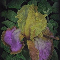 Mom's Iris Revisited