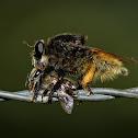 Bee-Killer