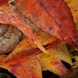 by Ksenija Glavak - Nature Up Close Other Natural Objects