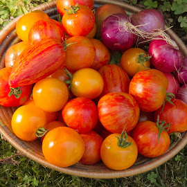 Home Grown by Jeff Clark - Food & Drink Fruits & Vegetables ( organic, tomato, basket, vegetables, local )