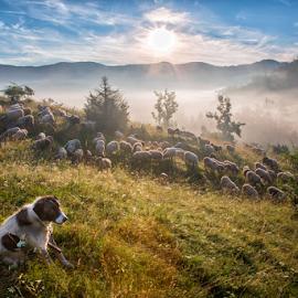 Morning haze by Stanislav Horacek - Landscapes Prairies, Meadows & Fields