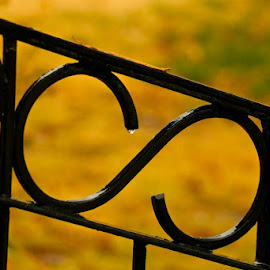 After The Rain by Kathy Suttles - Digital Art Things ( railing, metal, raindrop, yellow, black )