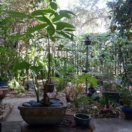 front porch bonsai by D.Thomas Laskowski - Nature Up Close Other plants