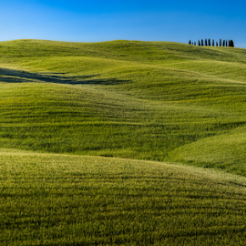 Toscana by Ronny Randen - Landscapes Mountains & Hills ( hills, toscana, trees, italy, san quirico d'orcia )