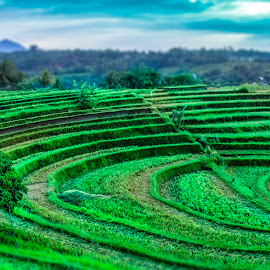 The Famous Curve by Ade Irgha - Landscapes Prairies, Meadows & Fields ( jatiluwih, curve, rice, paddy field, scenery )