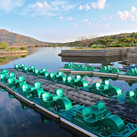 Waiting Paddle Boats by Kathy Suttles - City,  Street & Park  City Parks