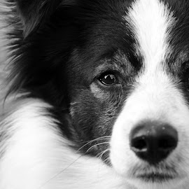 by Michela Merlin - Animals - Dogs Portraits ( #black #white #dog )