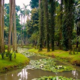 Hutan Kota by Yunnan Nanto - City,  Street & Park  City Parks