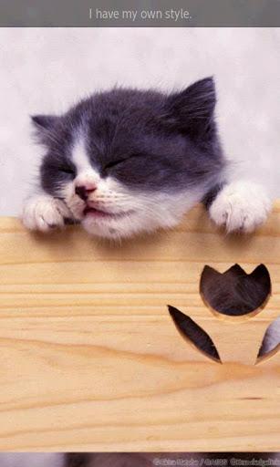 【免費書籍App】ipiks Love cats 1 Lite-APP點子
