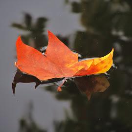 Leaving... by Sara Ramalho - Nature Up Close Leaves & Grasses ( winter, falls, leaves )