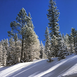 Winter in Colorado  by Misty Rigg - Novices Only Landscapes
