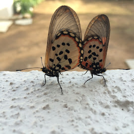 Mating butterflies  by Graeme Rogers - Instagram & Mobile iPhone ( butterfly, animals, butterflies, mating, close up )