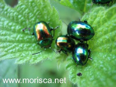 green-bugs02