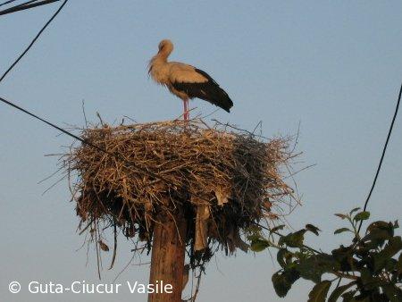 stork-01