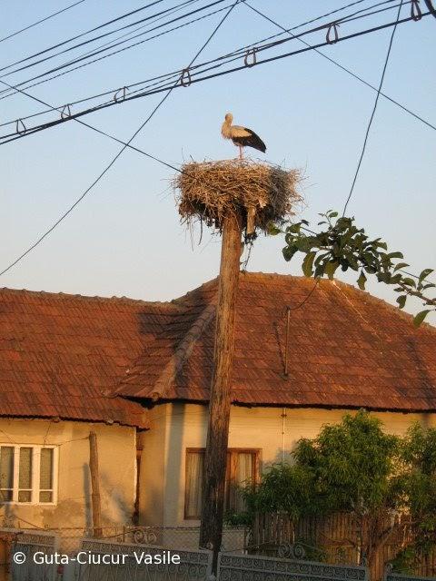 stork-02