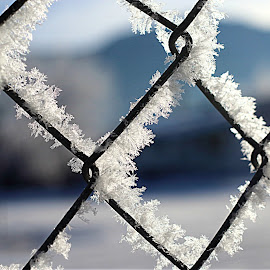 Frosty fence by Emily Samples - Novices Only Objects & Still Life ( fence, winter, color photo, snow, frost )