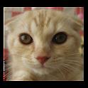 puzzle{Cat} icon
