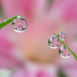 Detached by Citra Hernadi - Nature Up Close Natural Waterdrops