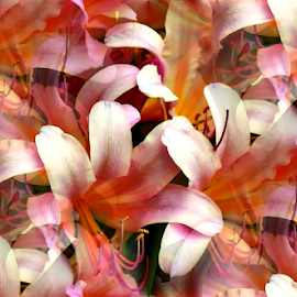 Seamless Abstract by Tina Dare - Digital Art Abstract ( abstract, seamless, lillies, patterns, designs, distorted, shapes )