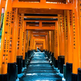 Fushimi Inari Shrine by Dede Sutarno - City,  Street & Park  Street Scenes ( japan, kyoto, fushimi inari shrine )
