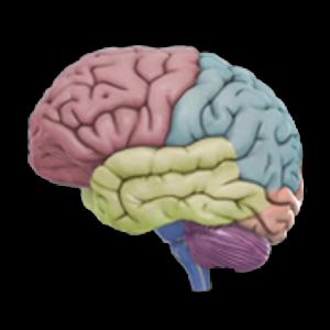 Download 3D Brain APK