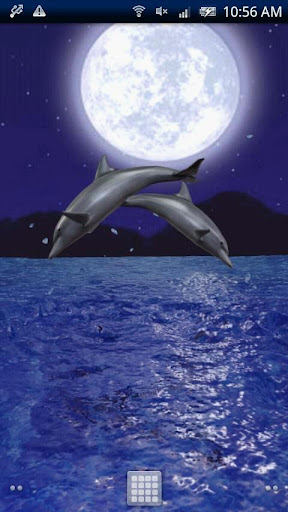 Dolphin Night