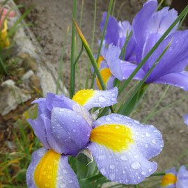 by Murielle Giannini - Nature Up Close Other plants