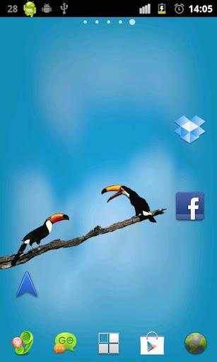 鸟类生活壁纸