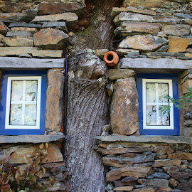 tree house by Paulo Jorge Marques - Buildings & Architecture Homes ( tree, window, blue, rock, portugal )