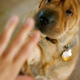 High Five! by Kayla Latouf - Animals - Dogs Playing