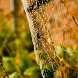 by Landogardner  Goma - Nature Up Close Webs