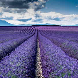 Lavanda by Marco Andreini - Landscapes Mountains & Hills ( francia, 2014, xf 35mm, provenza, valensole, fuji xt1 )