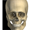 Visual Bones APK Descargar