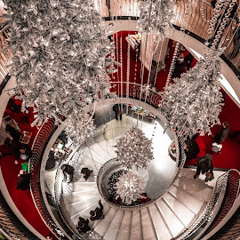 Christmas Departments by Stephen Bridger - Public Holidays Christmas ( shop, uk, department store, europe, christmas shopping, christmas decorations, christmas, holidays, travel, christmas trees, united kingdom, england, london, great britain, christmas tree, shopping, travel photography, britain )