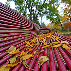 by Dipali S - Artistic Objects Furniture ( vertical, wood, bench, solitude, leaf, tree trunk, spring, iron, photography, comfortable, alley, color image, cold, clean, tree, metal, seat, autumn, park bench, empty, evening, park, green, city life, relaxation, rods, maple, new, red, sitting, vanishing point, outdoors, selective focus, summer, brown, outdoor chair, lifestyles, wide-angle lens, public, furniture, object, fall, color, colorful, nature )