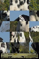 Screenshot of Dog Puzzle: Dalmatian