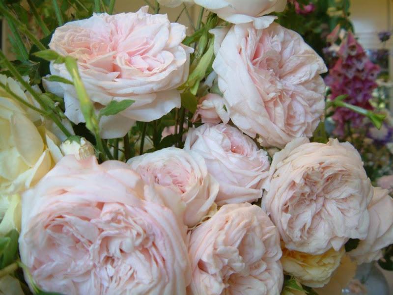 http://lh4.ggpht.com/gabrieladamitoledo/SE6y1QlALxI/AAAAAAAAAqE/0UNpvCl5-Po/s800/Filoli+Roses.jpg