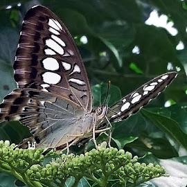 Kupu-kupu by AbngFaisal Ami - Instagram & Mobile Other (  )