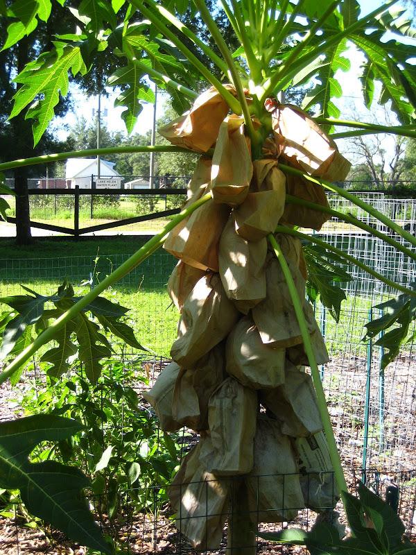 Happy gardener 39 s garden wonders - The garden web forum ...