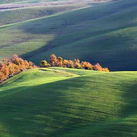 Tuscany in autumn by Bogi Cindog - Landscapes Travel ( field, hill, tuscany, italia, autumn, colors )