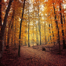 untitled by Zsolt Zsigmond - Landscapes Forests ( autumn, colors, fall, path, trees, forest )